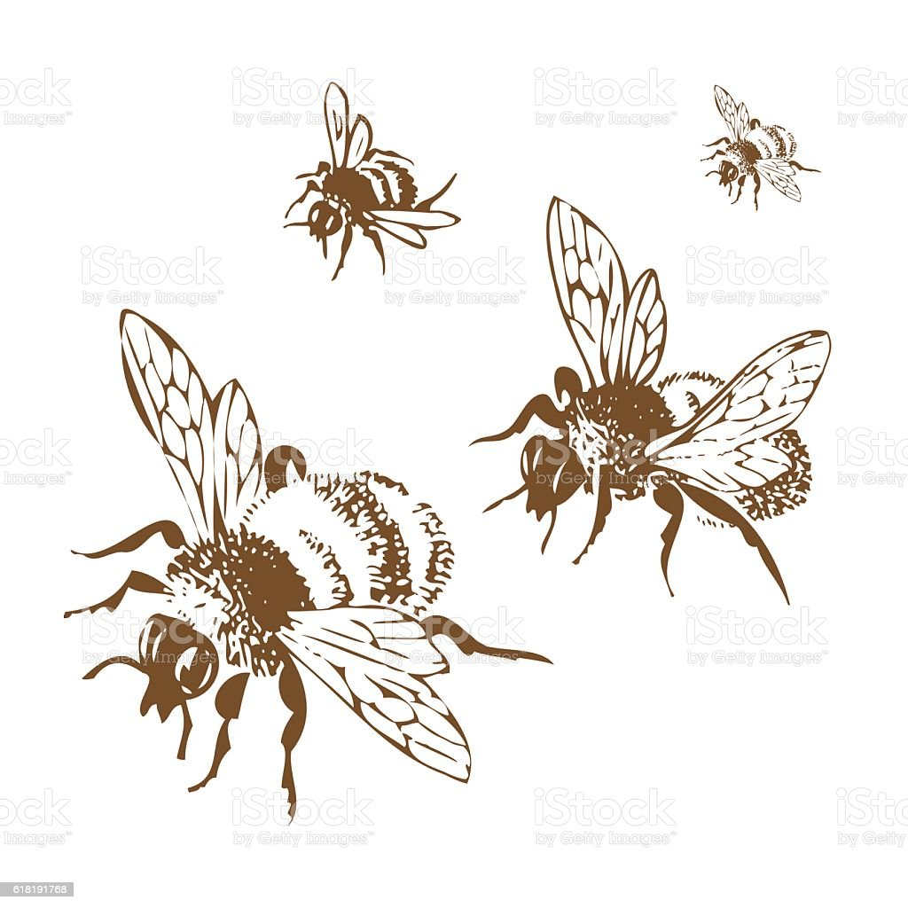 Vector engraving antique illustration of honey flying bees, isol vector art illustration