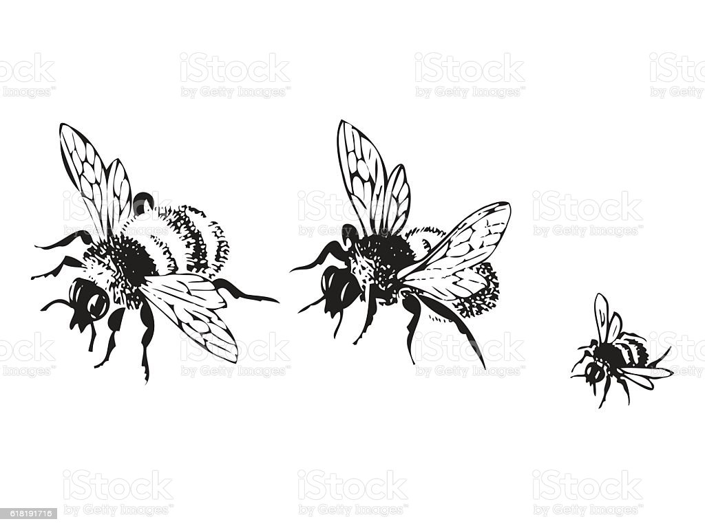 Vector engraving antique illustration of honey flying bees – artystyczna grafika wektorowa