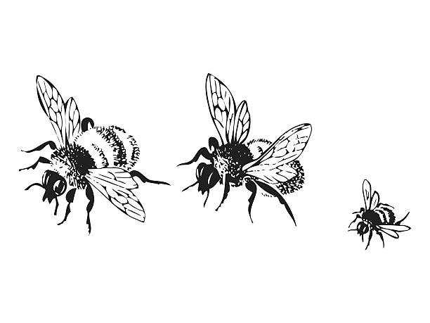 vector engraving antique illustration of honey flying bees - bienenwachs stock-grafiken, -clipart, -cartoons und -symbole