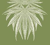 Hemp LeavesVector Engraving of Hemp Leaves