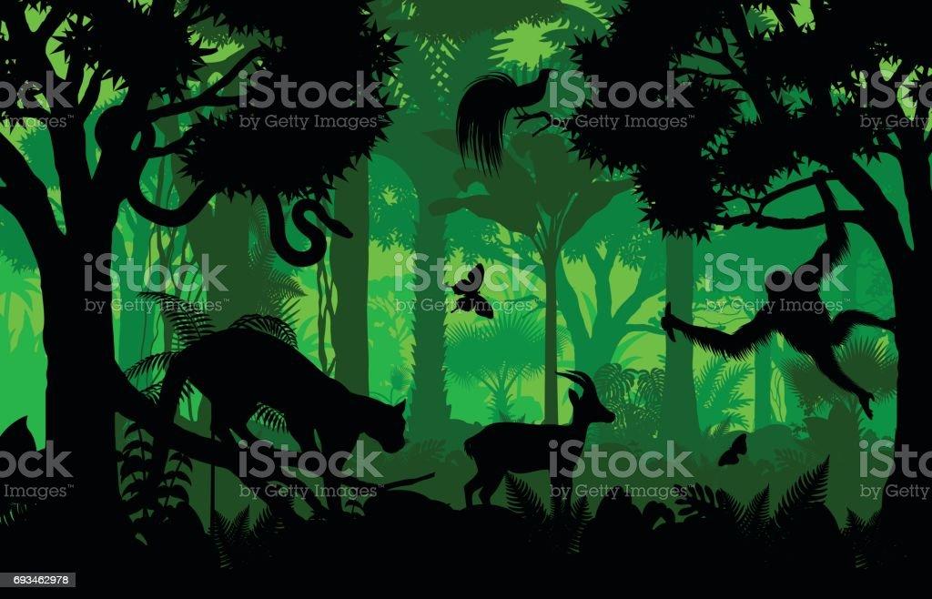 Vector de noche indonesio selva tropical Selva fondo leopardo nublado, gacela, python, ave de paraíso y orangután - ilustración de arte vectorial