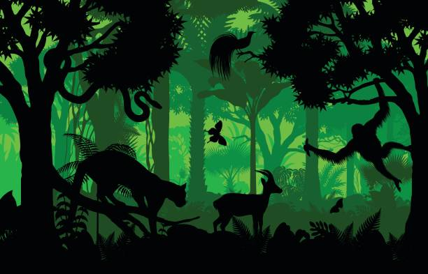 vector evening indonesian tropical rainforest jungle background with clouded leopard, gazelle, python, paradise bird and orangutan - animals background stock illustrations