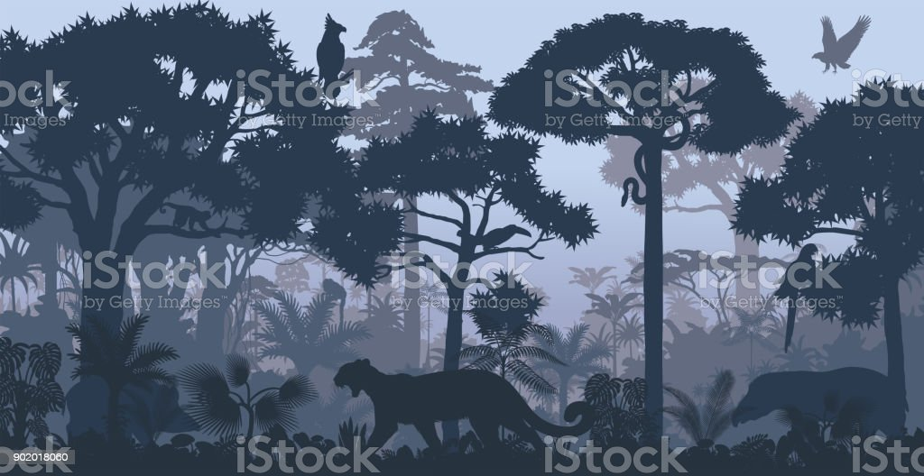 Vector evening tropical rainforest Jungle background with jaguar, harpy, monkey, parrot, toucan, anaconda and boar
