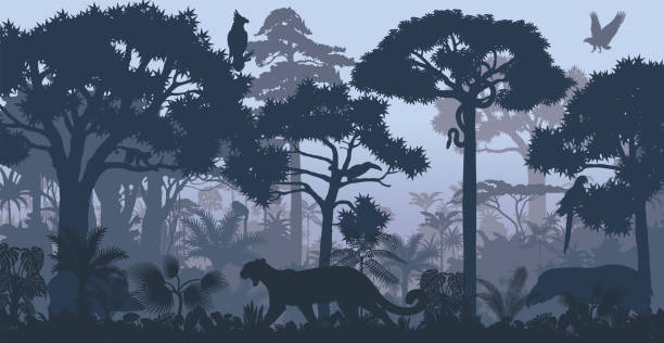 vector evening tropical rainforest jungle background with jaguar, harpy, monkey, parrot, toucan, anaconda and boar - animals background stock illustrations