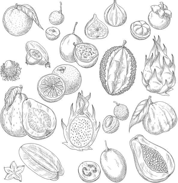 illustrazioni stock, clip art, cartoni animati e icone di tendenza di vector exotic or tropical fruits sketch icons set - illustrazioni di passiflora
