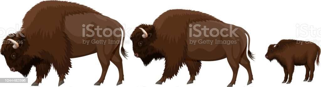 vector family of brown zubr buffalo bisons with kid vector family of brown zubr buffalo bisons with kid Alberta stock vector