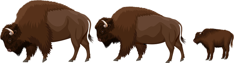 Vector Family Of Brown Zubr Buffalo Bisons With Kid Stock Illustration - Download Image Now