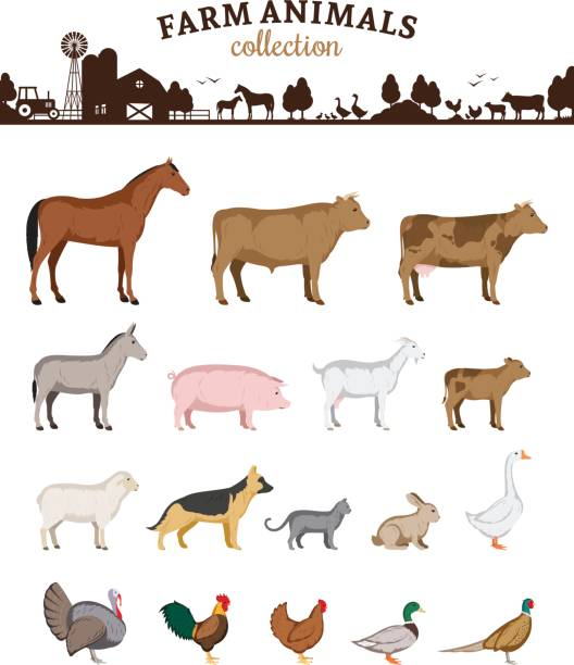 Vector farm animals cartoons Vector farm animals isolated on white. Livestock and poultry icons farm animals stock illustrations