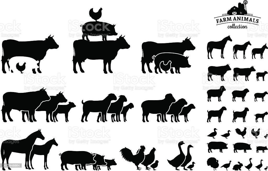 Vector Farm Animals Collection Isolated on White vector art illustration