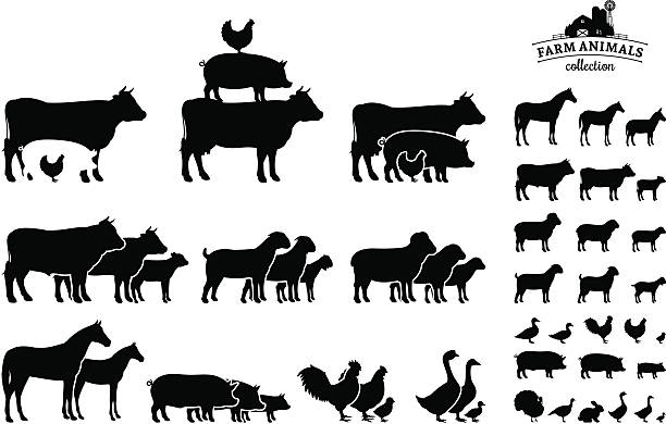 Vector Farm Animals Collection Isolated on White Farm animals silhouettes collection. Lots of farm animal isolated on white for your work. drake male duck stock illustrations