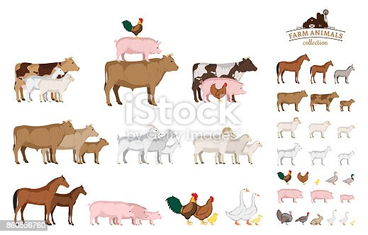 Vector farm animals isolated on white. Livestock and poultry icons for farms, groceries, packaging and branding