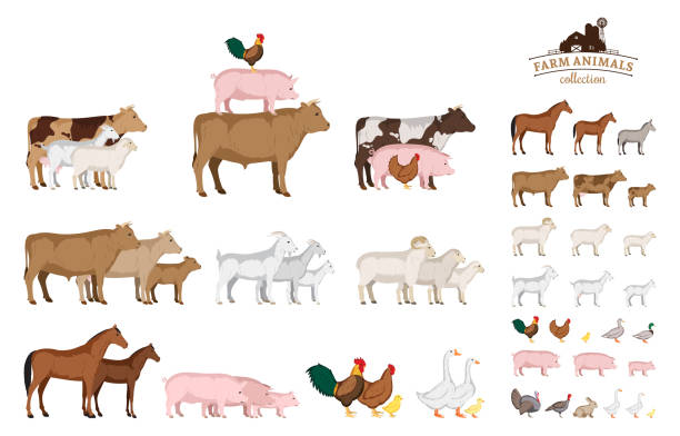 Vector farm animals collection isolated on white Vector farm animals isolated on white. Livestock and poultry icons for farms, groceries, packaging and branding drake male duck stock illustrations