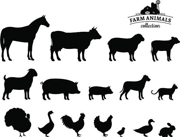 ilustraciones, imágenes clip art, dibujos animados e iconos de stock de vector siluetas de animales de granja aislado en blanco - animales de granja