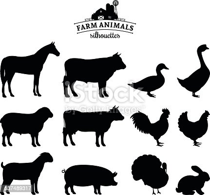 Farm animals collection. Lots of farm animal isolated on white for your work.