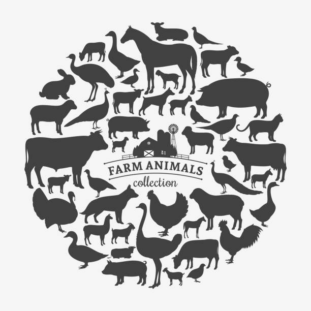 Vector farm animals silhouettes Vector farm animals silhouettes isolated on white. Livestock and poultry icons farm animals stock illustrations