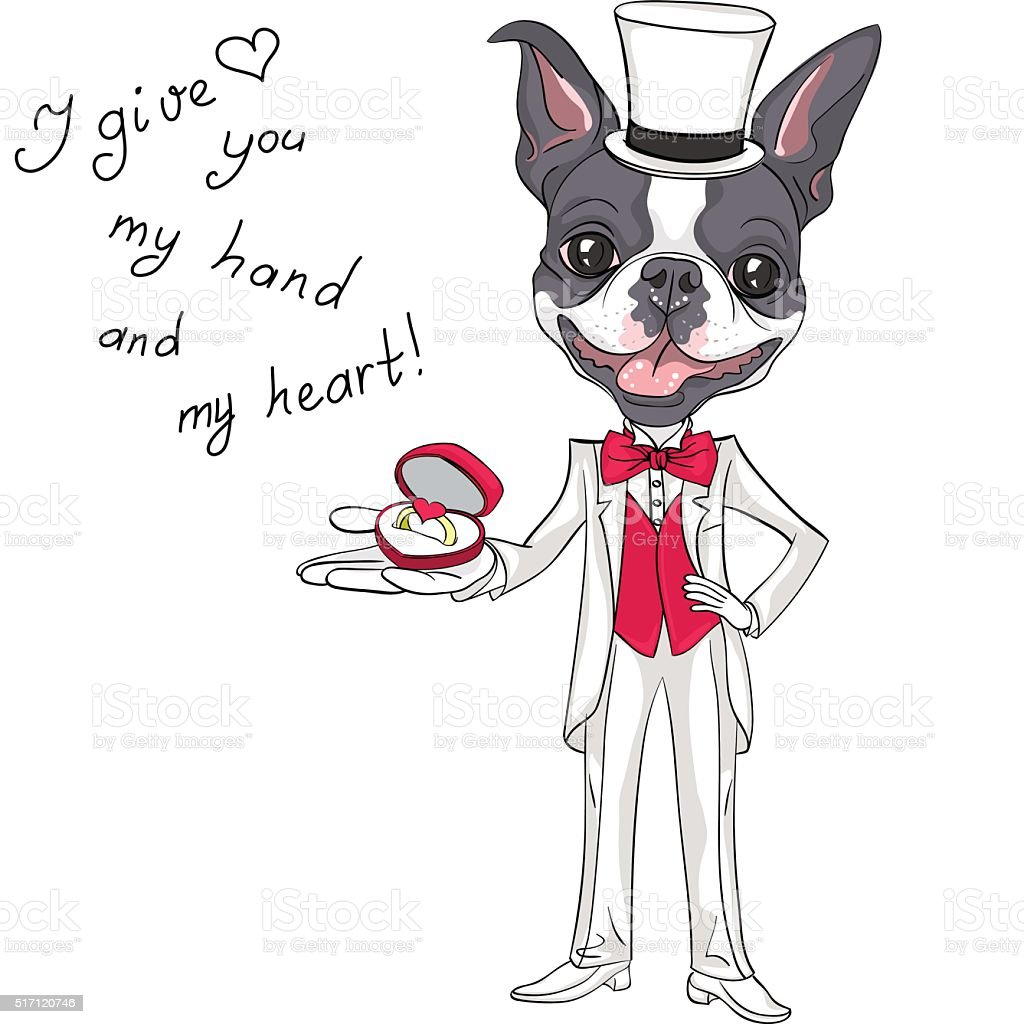 Vector fashion elegant groom dog Boston Terrier vector art illustration