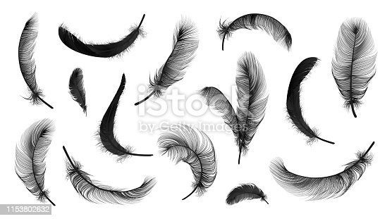 Vector feathers collection, set of different falling fluffy twirled feathers, isolated on transparent background. Realistic style, vector 3d illustration