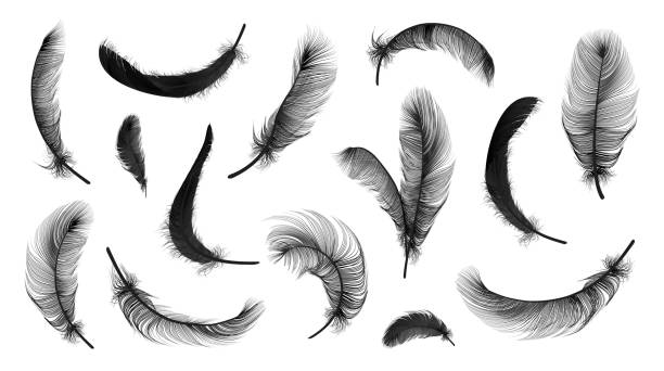 illustrazioni stock, clip art, cartoni animati e icone di tendenza di vector feathers collection - piume colorate