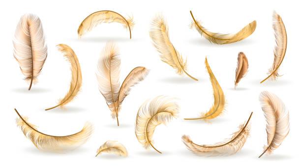 Colección de plumas vectoriales - ilustración de arte vectorial