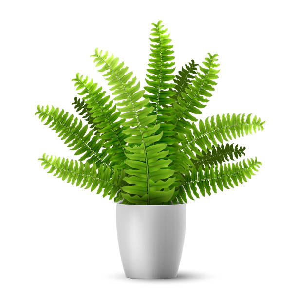 vector fern in a pot Vector realistic fern in a pot. Ornamental houseplant. fern stock illustrations