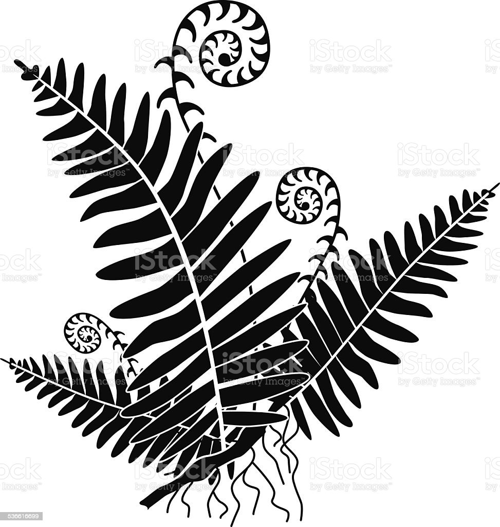 vector fern with new growth curls in black and white vector art illustration