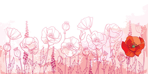 Vector field with outline Poppy flower, bud, leaves and seed pod in pink and red on the pastel textured background. Horizontal composition with ornate contour Poppy for summer decor.