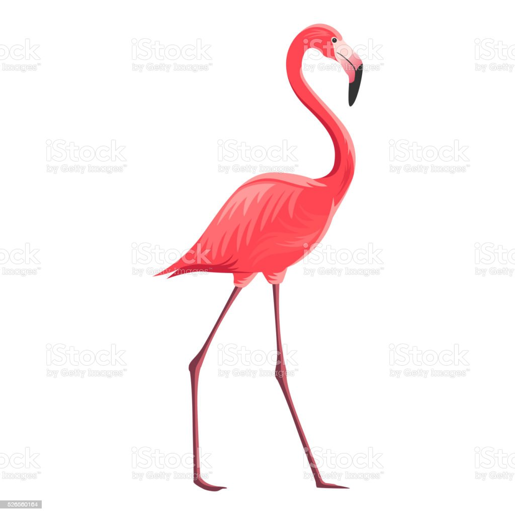 Vector Flamingo Stock Vector Art & More Images of Africa 526560164 ...