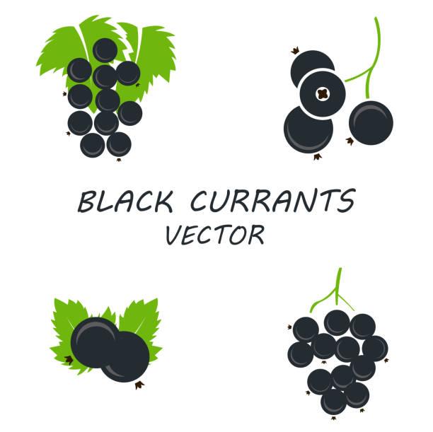 Vector flat black currants icons set Vector flat black currants icons set on white background black currant stock illustrations