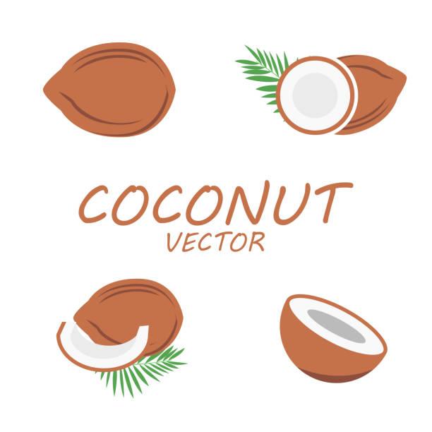 ilustrações, clipart, desenhos animados e ícones de conjunto de ícones do vetor plana de coco - coqueiro