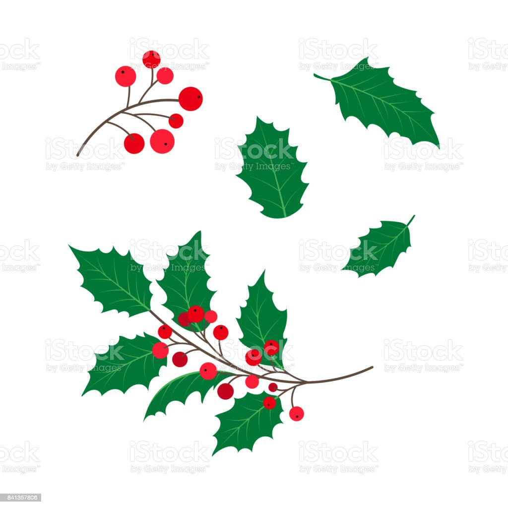 vector flat holly tree leaves, branch berry set.