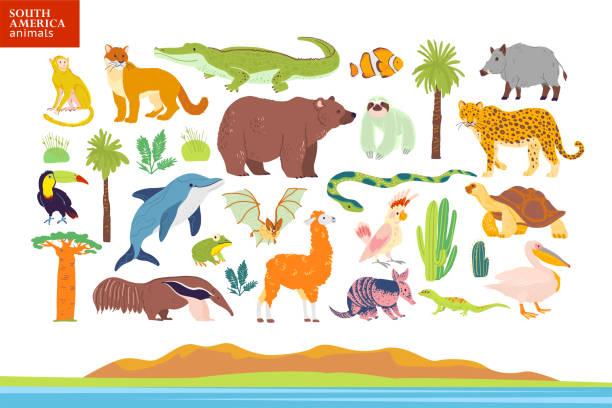 vector flache illustration von südamerika-tieren, landschaft, pflanzen: krokodil, bär, anaconda, ameisenbär, affe, tukane palme, eiche, kaktus. - ameisenbär stock-grafiken, -clipart, -cartoons und -symbole