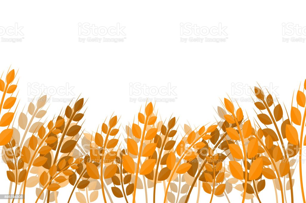 Vector flat seamless pattern of wheat on the white background. Concept of bakery, organic food and harvest. vector art illustration