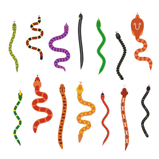 vector flat snakes collection isolated on white background - snake stock illustrations, clip art, cartoons, & icons