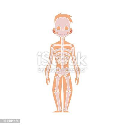 Vektor Flache Struktur Menschlichen Körper Anatomie Skelett Stock ...