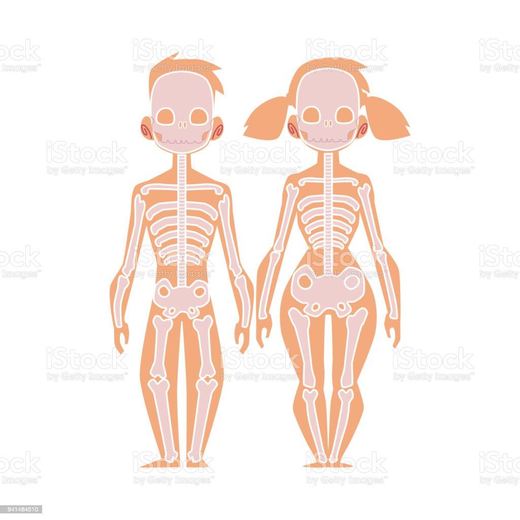 Ilustración De Vector Plano Estructura Humana Cuerpo
