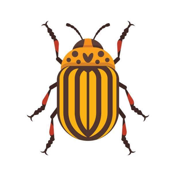 vektor-illustration der flachen stil der colorado-käfer. - schrottplatzkunst stock-grafiken, -clipart, -cartoons und -symbole