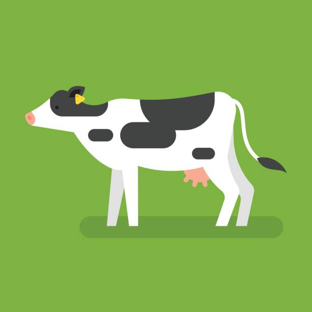 Royalty Free Cow Udders Clip Art Vector Images Illustrations Istock