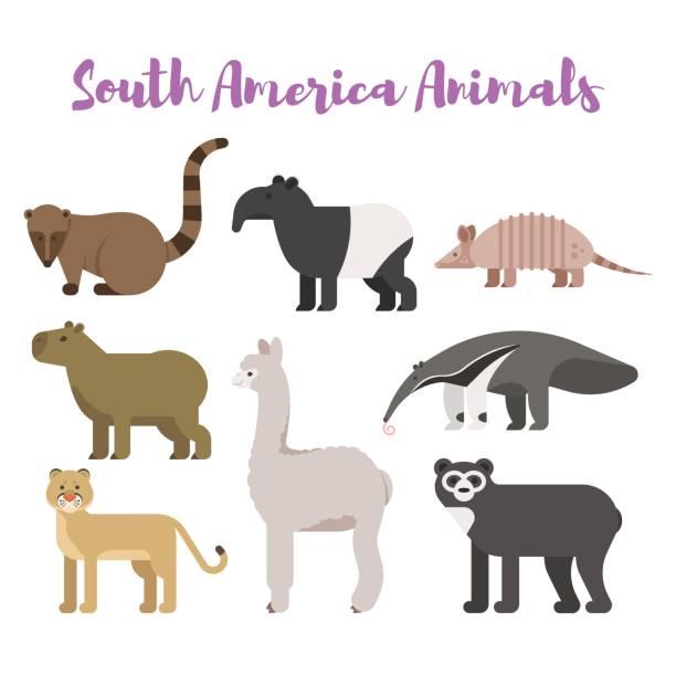 vektor formatvorlagensatz flache tiere in südamerika. - ameisenbär stock-grafiken, -clipart, -cartoons und -symbole