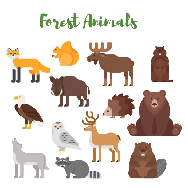 Vector flat style set of forest animals. Vector flat style set of forest animals. Icon for web. Isolated on white background. beaver stock illustrations