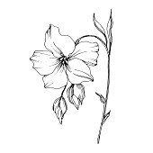 Vector Flax floral botanical flowers. Wild spring leaf wildflower isolated. Black and white engraved ink art. Isolated flax illustration element.