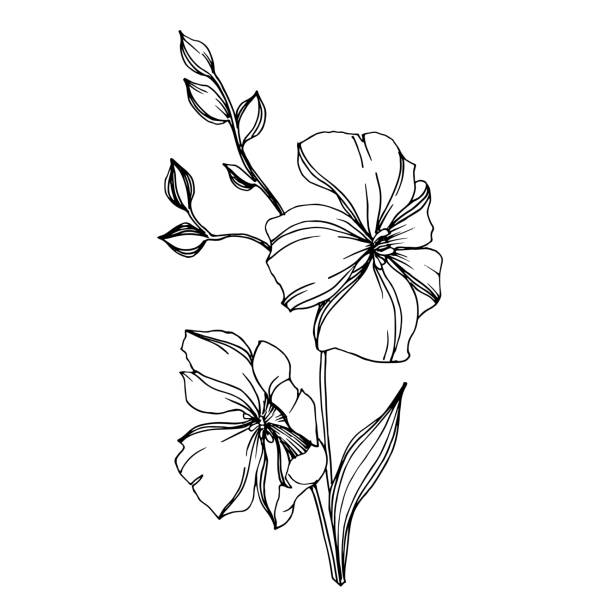 Vector Flax floral botanical flowers. Black and white engraved ink art. Isolated flax illustration element. Vector Flax floral botanical flowers. Wild spring leaf wildflower isolated. Black and white engraved ink art. Isolated flax illustration element. autumn silhouettes stock illustrations