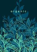 Vector floral background. Nature hand drawn illustration, art line botanical plant. Elegant graphic green template Organic card Bio decor, ornament, tropical harvest Tea bush, branch, flower, leaves