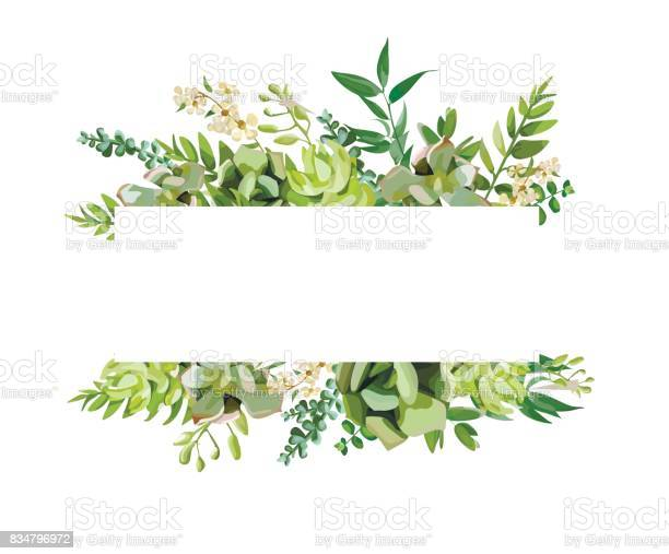 Vector floral design horizontal card design soft succulent cactus vector id834796972?b=1&k=6&m=834796972&s=612x612&h=ifrcfelhxworcamufi4cnrje5j0ax tvkdap 38bwsw=