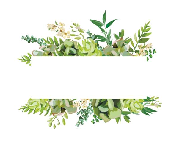 vector floral design horizontal card design. soft succulent, cactus flower garden eucalyptus green fern seasonal branches leaves mix. greeting invitation wedding editable. frame border with copy space - floral frames stock illustrations, clip art, cartoons, & icons