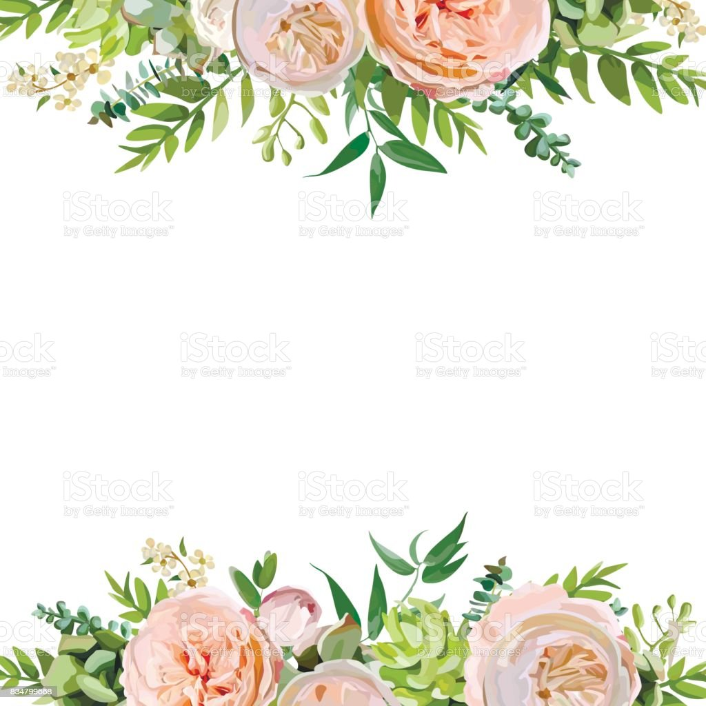Vector floral design square card design. Soft pink peach english garden rose, eucalyptus green fern leaves mix. Greeting delicate wedding invitation, Frame border, poster with copy space for your text vector art illustration