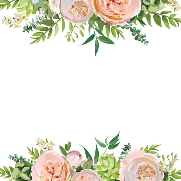 vector floral design square card design. soft pink peach english garden rose, eucalyptus green fern leaves mix. greeting delicate wedding invitation, frame border, poster with copy space for your text - flowers stock illustrations, clip art, cartoons, & icons