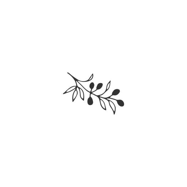 Vector floral hand drawn element in elegant and minimal style. Vector floral hand drawn label element in elegant and minimal style. Isolated object, branch with berries. Black on white illustration. For badges and branding business identity. olives stock illustrations