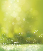 White flowers and grass on green, bokeh background.
