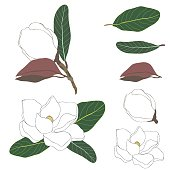Vector floral set with magnolias and leaves, flower buds. Line art on white background. Color sketch, ink drawing. Hand drawn colorful illustration for your design, prints, fashion