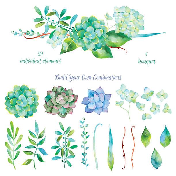 vektor floral set.colorful blumenkollektion mit blättern und blumen in aquarell zeichnung - rosenpflanzen stock-grafiken, -clipart, -cartoons und -symbole